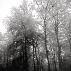 Bäume im Nebel 2