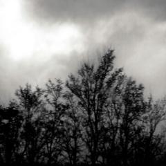 Bäume im Nebel 3