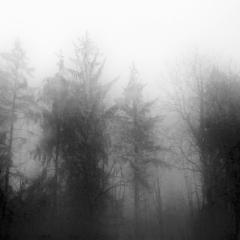 Bäume im Nebel 4