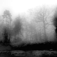 Bäume im Nebel 5