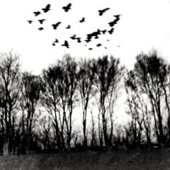 Bäume_im_-Nebel-1