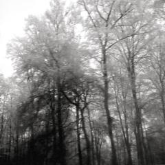 Bäume_im_-Nebel-2