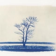 Lebensbaum.2018.1