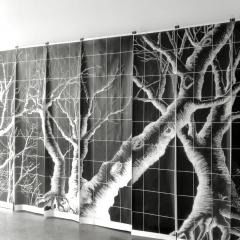 Wald der Verwunderung